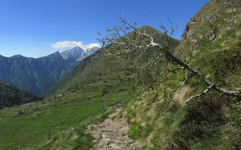 TAPPA 17 – 27 giugno – da Rifugio Passo del Vivione  (BG) a Rifugio Cristina – Val Belviso (SO)