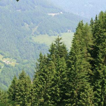 19 gennaio 2018: presentato a Milano il Libro Verde delle Foreste Lombarde